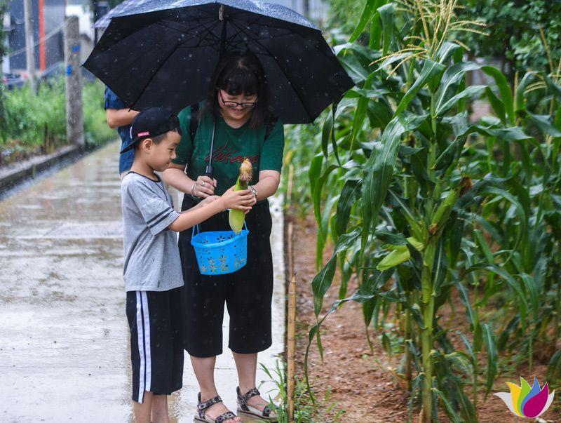 8月12日,游客在板桥镇的生态农场内体验采摘游。